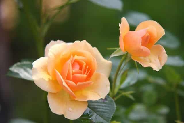 Sådan indretter du din have med blomster, frugttræer og buske